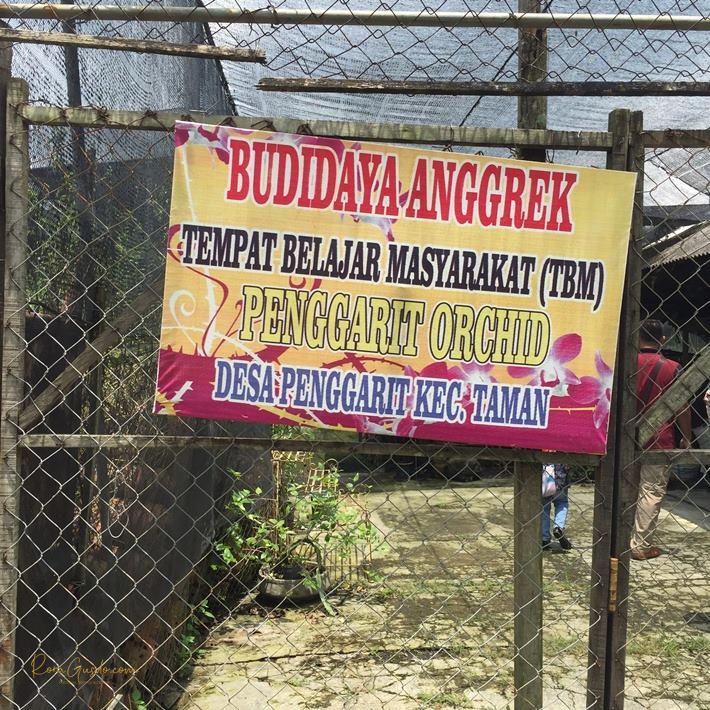 Budidaya Anggrek Penggarit Pemalang
