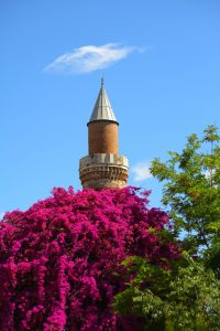 Bunga-bunga di Turki