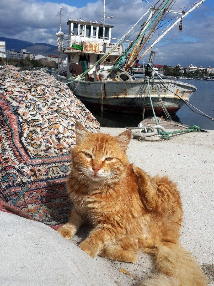 Kucing di Ephesus Turki